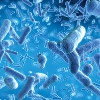 Занимательная связь между кишечными бактериями и мозгом